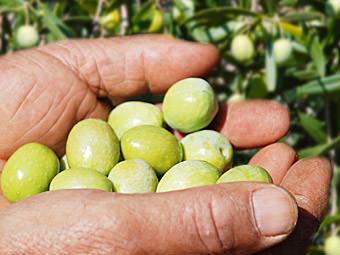 Tropföl - Olivenöl